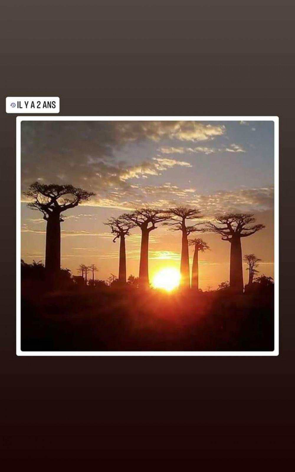 Baoba Avenue