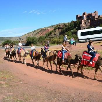 Camel trekking in Ourika
