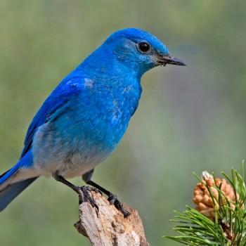 birds in Ghana