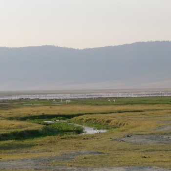 Flamingos, Lions and hippo
