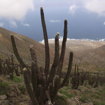 National Park Morro Moreno