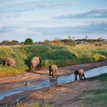 2 Days 1 Night Safari