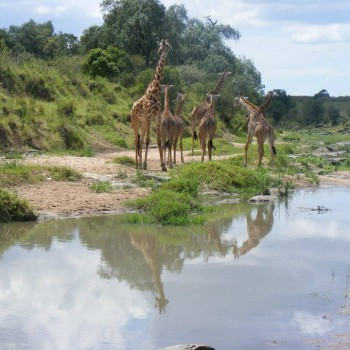 Maasai Mara, The magical place