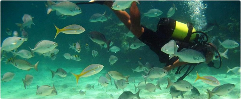 Things to Do in Cuba - The Bay of Pigs Diving