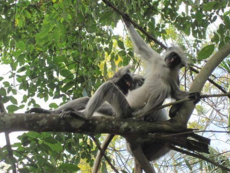 Відвідайте Танзанію