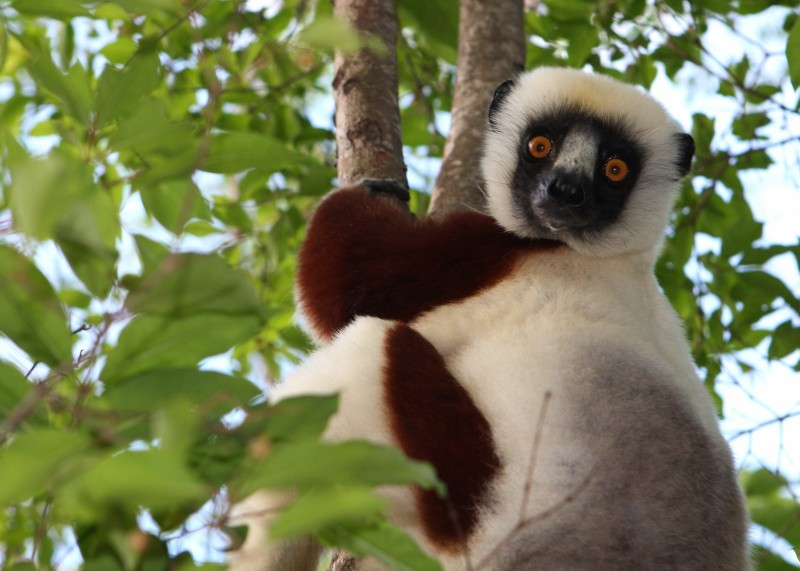 Поїздка на Мадагаскар